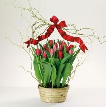 Totally Tulips Garden Planter (Cut Tulips)